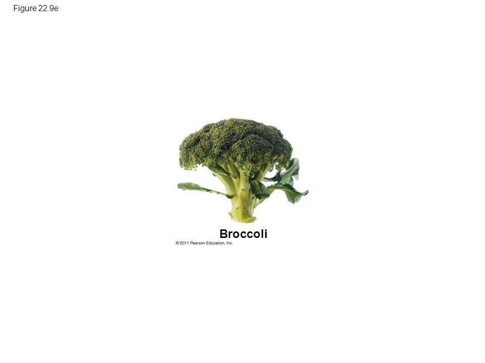 Figure 22.9e Broccoli Figure 22.9 Artificial selection.
