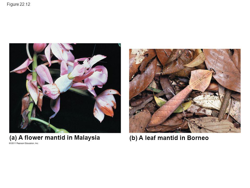 (a) A flower mantid in Malaysia (b) A leaf mantid in Borneo