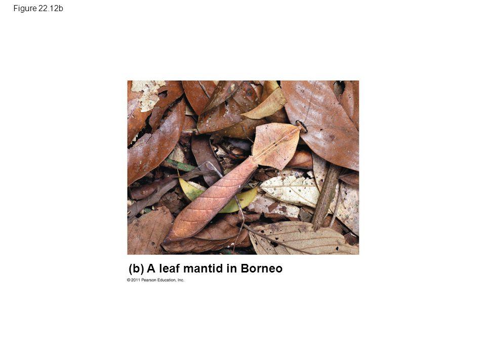 (b) A leaf mantid in Borneo