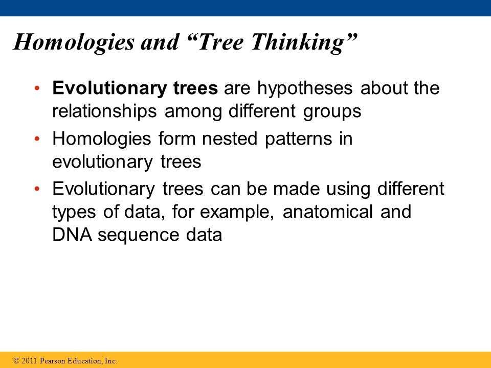 Homologies and Tree Thinking