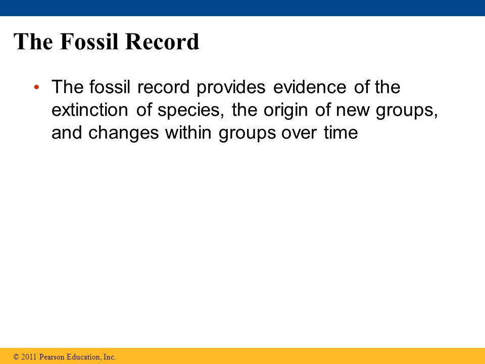 The Fossil Record The fossil record provides evidence of the extinction of species, the origin of new groups, and changes within groups over time.