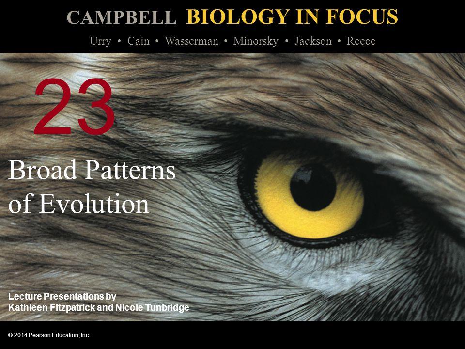 Broad Patterns of Evolution