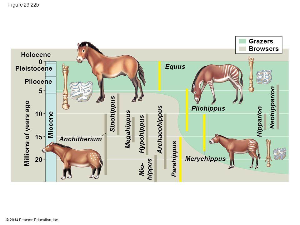 Grazers Browsers Holocene Equus Pleistocene Pliocene 5 Neohipparion