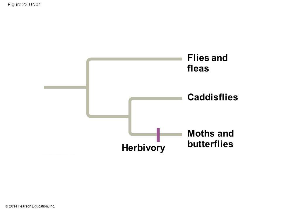 Flies and fleas Caddisflies Moths and butterflies Herbivory