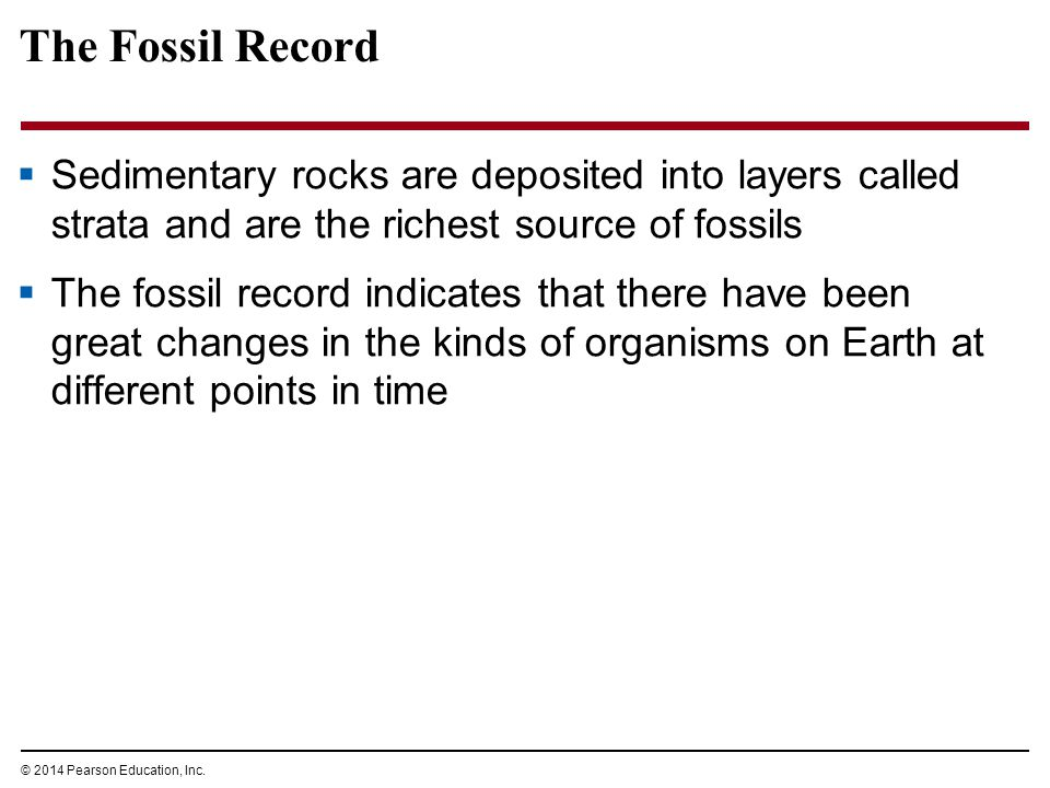 The Fossil Record Sedimentary rocks are deposited into layers called strata and are the richest source of fossils.