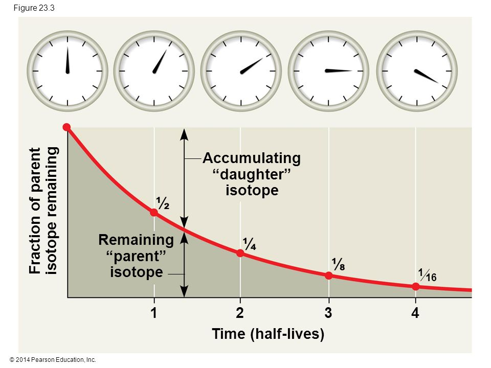 ½ ¼ ⅛ Accumulating daughter isotope Fraction of parent