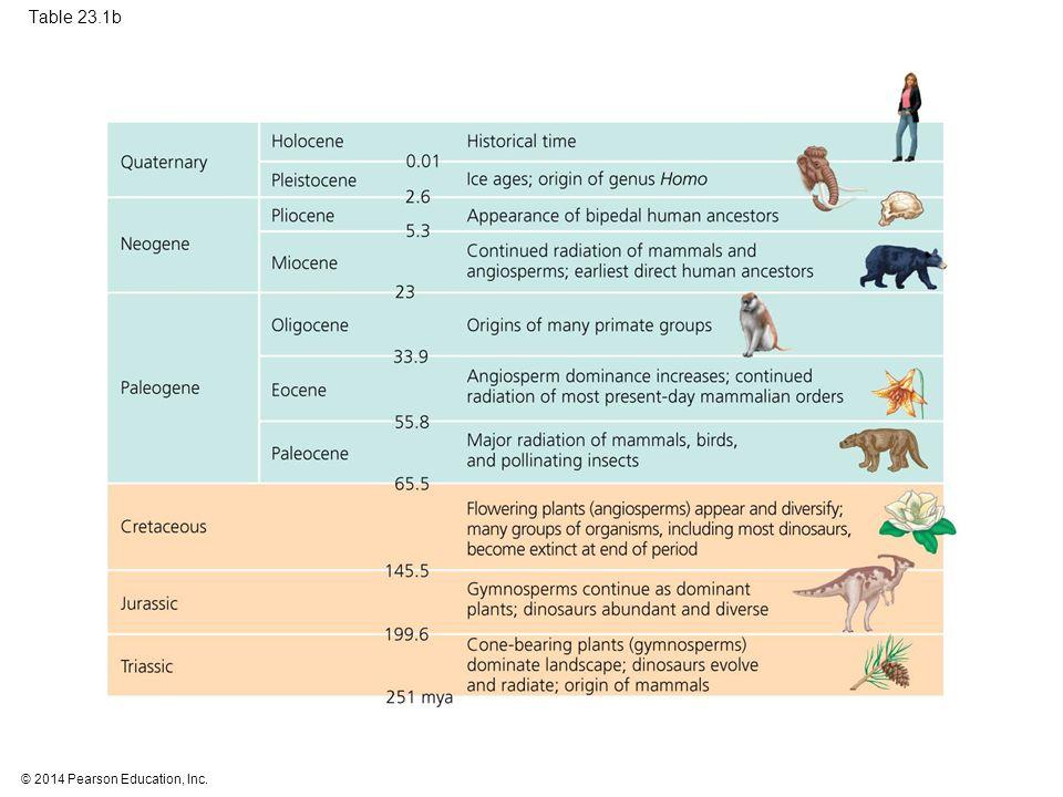 Table 23.1b Table 23.1b The geologic record (part 2: Mesozoic era and Cenozoic era) 24