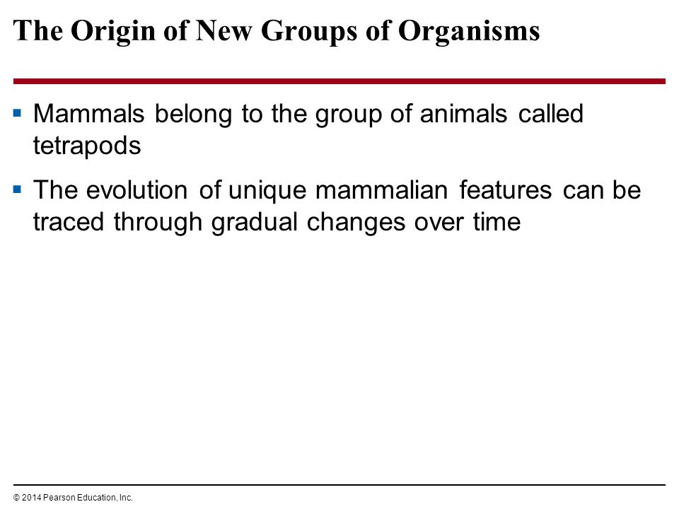 The Origin of New Groups of Organisms