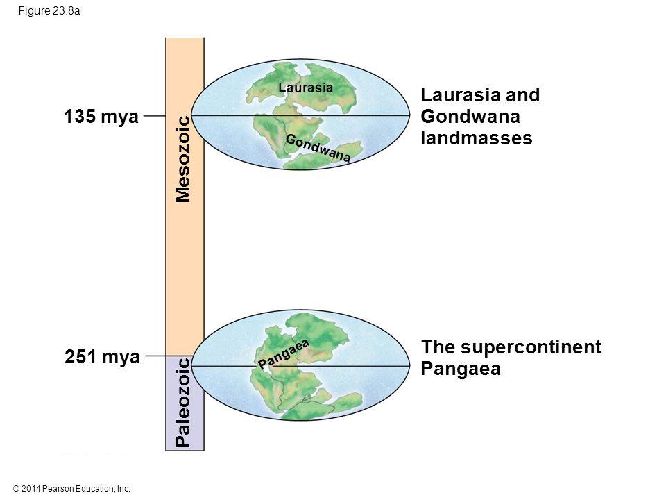 Laurasia and Gondwana 135 mya landmasses Mesozoic The supercontinent