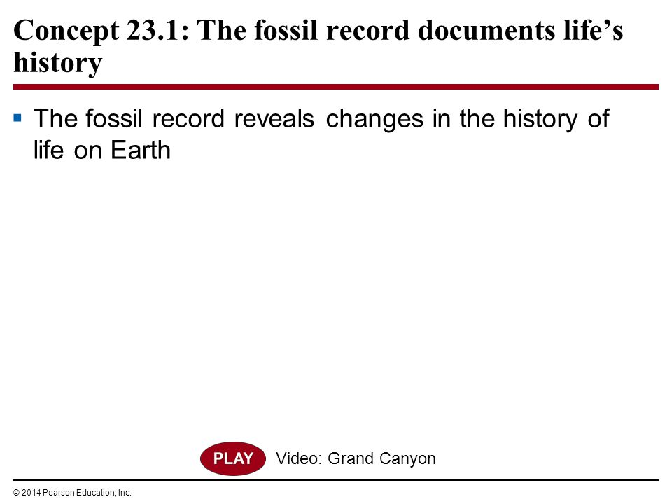 Concept 23.1: The fossil record documents life's history