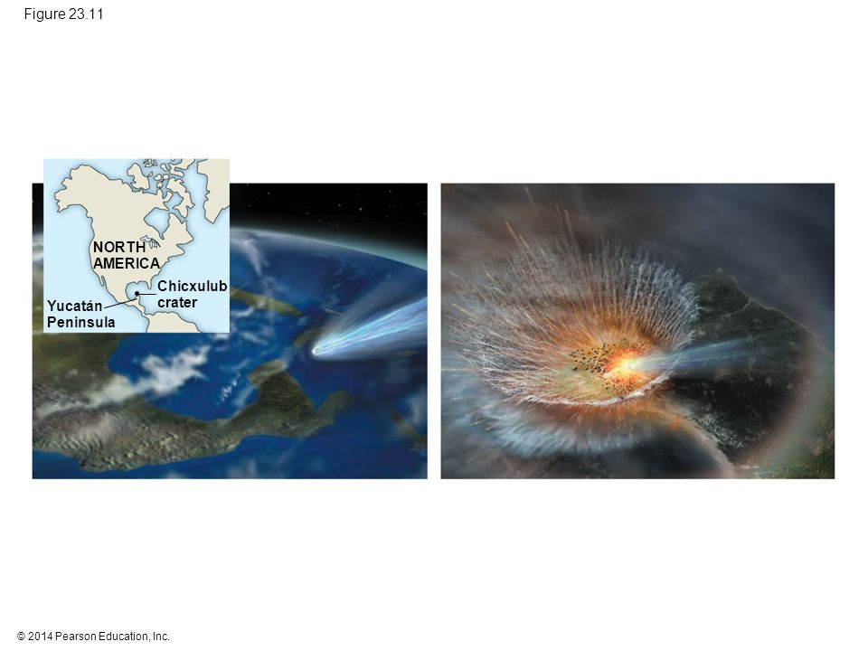 Figure 23.11 NORTH. AMERICA. Chicxulub. crater. Yucatán. Peninsula. Figure 23.11 Trauma for Earth and its Cretaceous life.