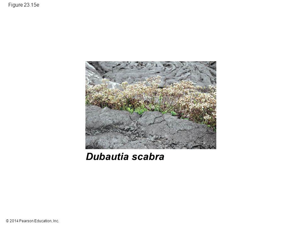 Dubautia scabra Figure 23.15e