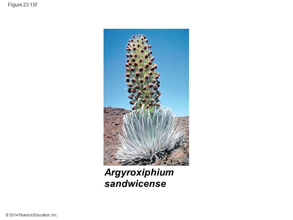 Argyroxiphium sandwicense Figure 23.15f