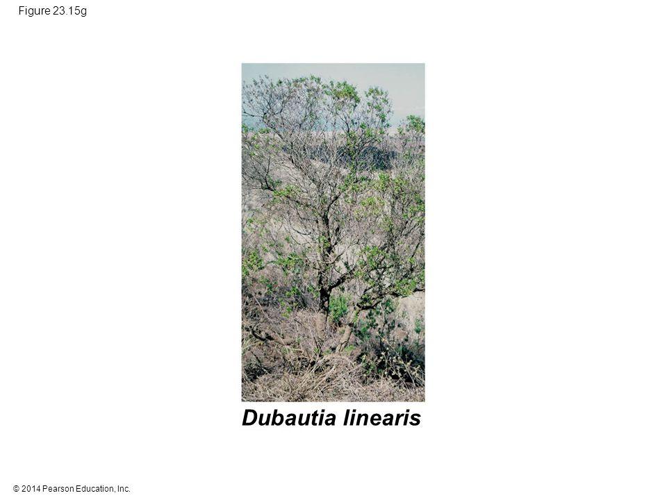 Dubautia linearis Figure 23.15g