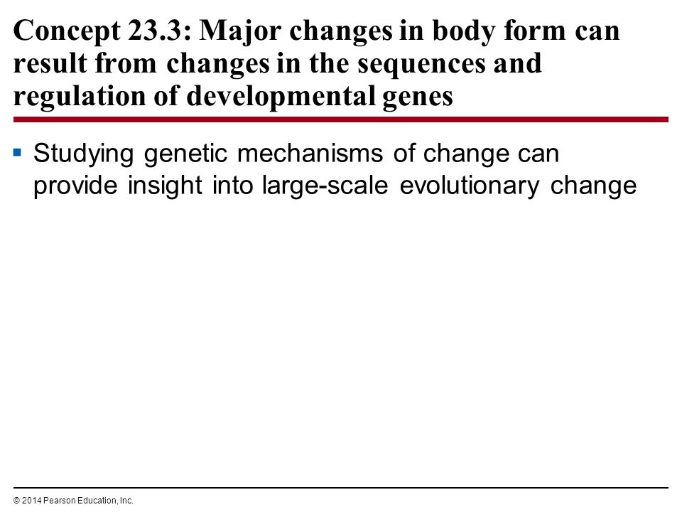 Concept 23.3: Major changes in body form can result from changes in the sequences and regulation of developmental genes