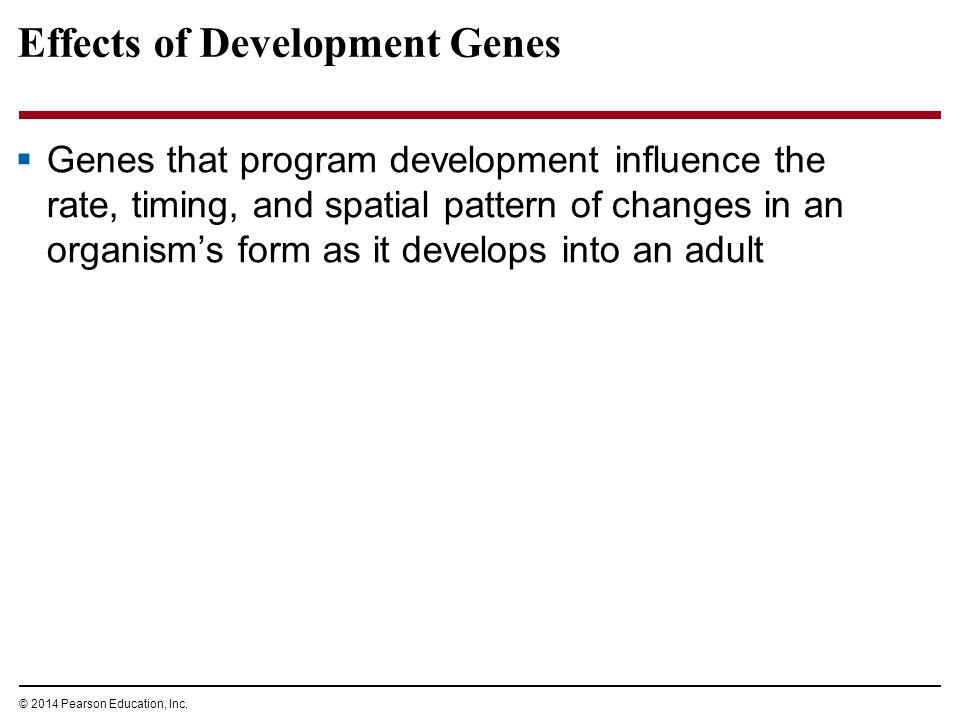 Effects of Development Genes