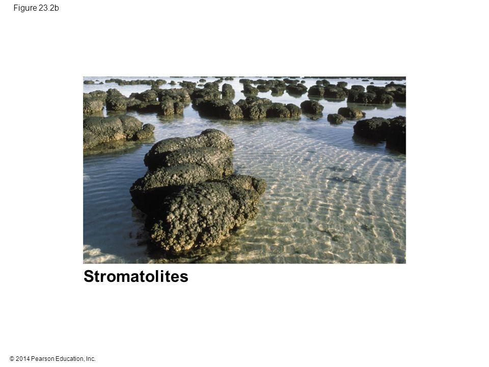 Stromatolites Figure 23.2b