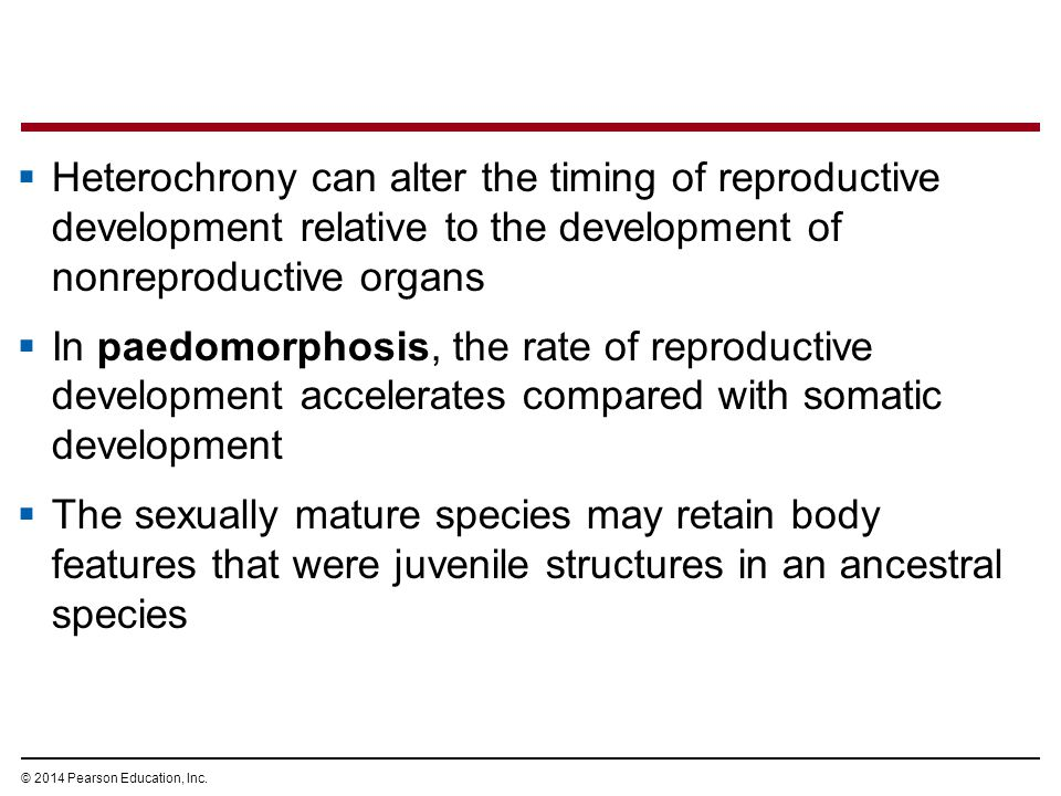 Heterochrony can alter the timing of reproductive development relative to the development of nonreproductive organs