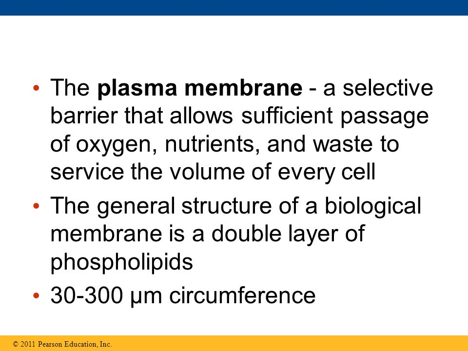 The plasma membrane - a selective barrier that allows sufficient passage of oxygen, nutrients, and waste to service the volume of every cell