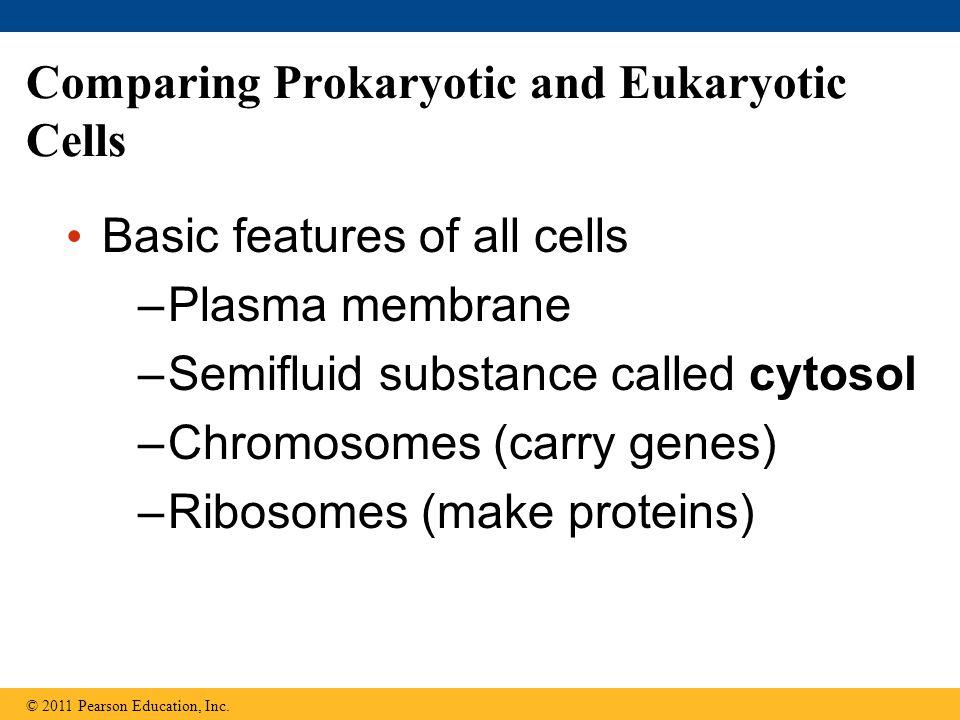 Comparing Prokaryotic and Eukaryotic Cells