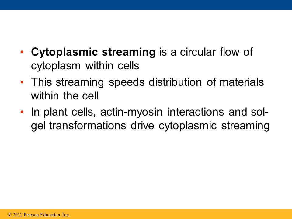 Cytoplasmic streaming is a circular flow of cytoplasm within cells