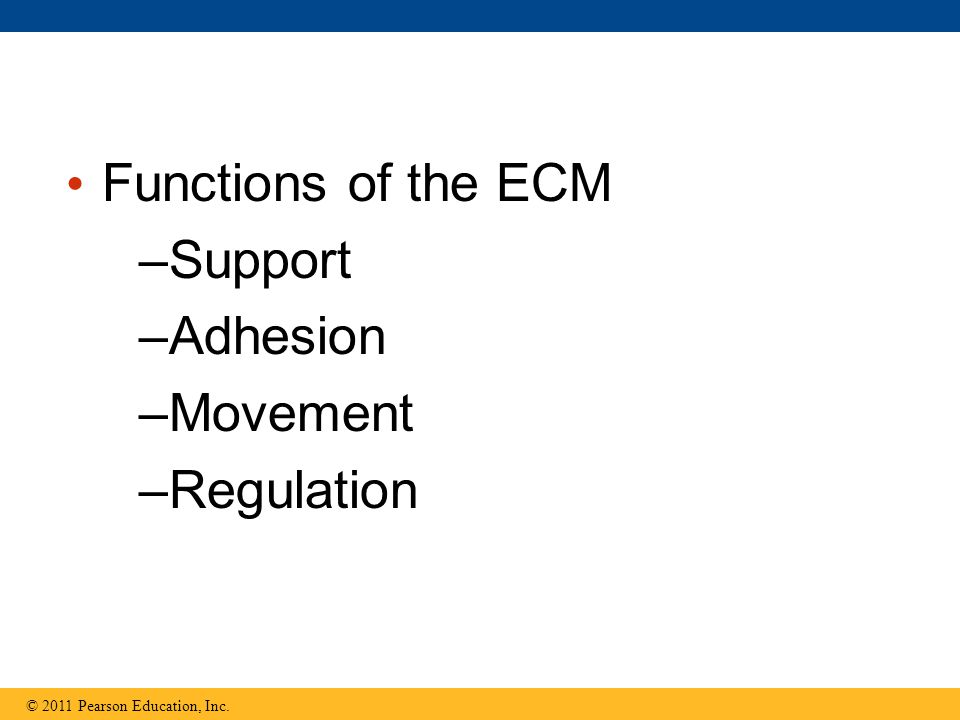 Functions of the ECM Support Adhesion Movement Regulation