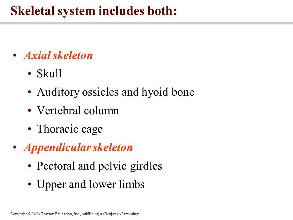 Skeletal system includes both:
