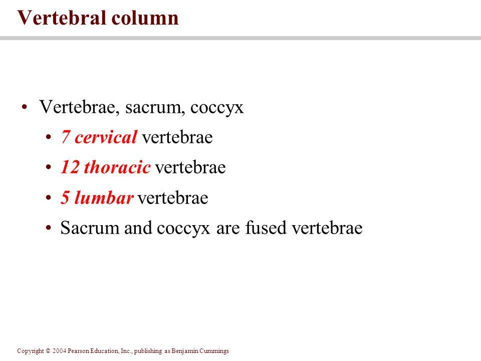 Vertebral column Vertebrae, sacrum, coccyx 7 cervical vertebrae