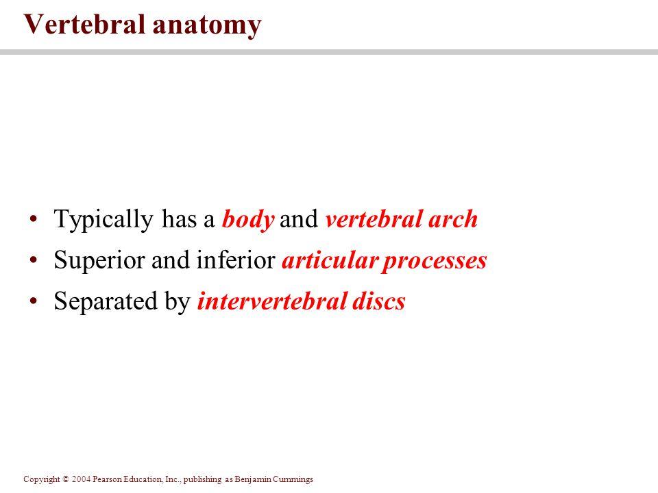 Vertebral anatomy Typically has a body and vertebral arch