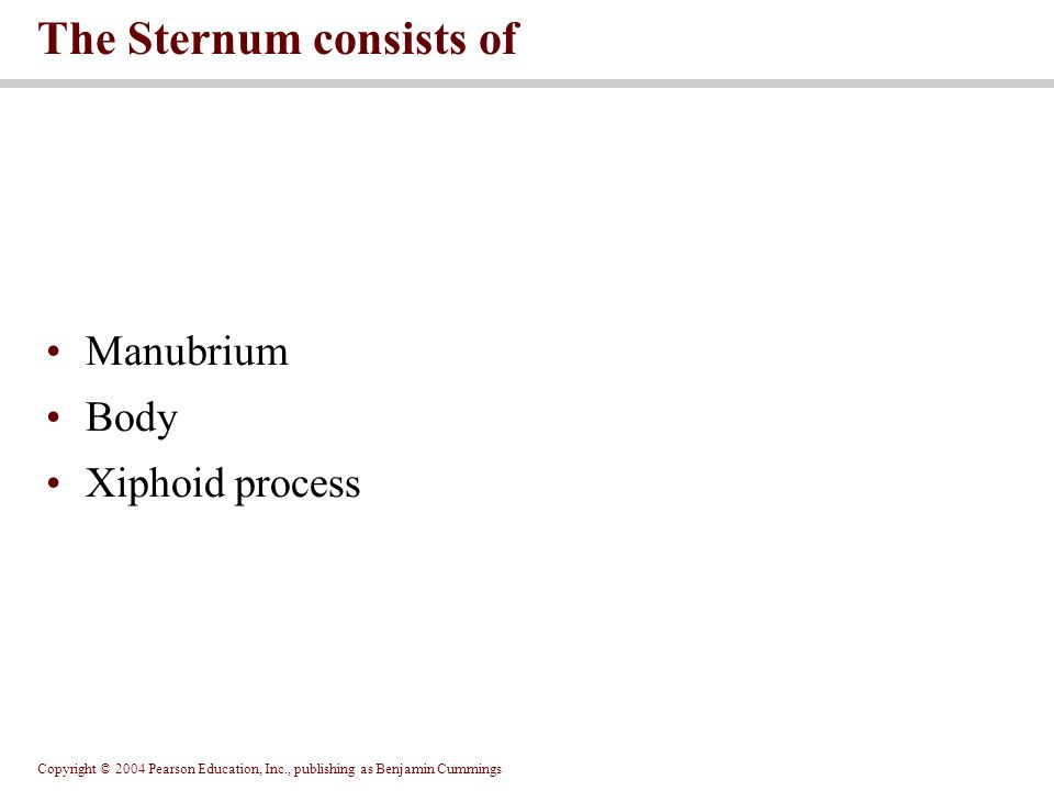 The Sternum consists of