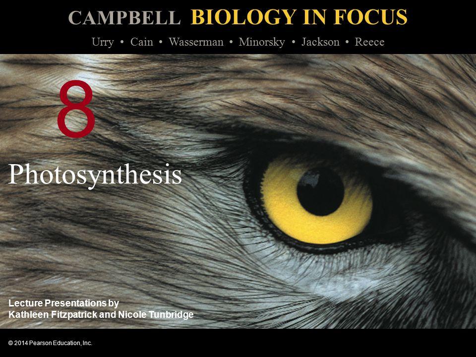 8 Photosynthesis