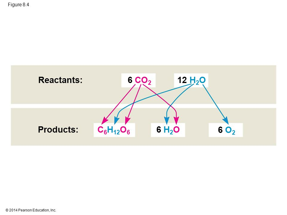 Reactants: 6 CO2 12 H2O Products: C6H12O6 6 H2O 6 O2 Figure 8.4