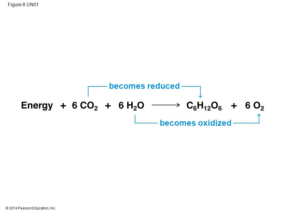becomes reduced becomes oxidized Figure 8.UN01