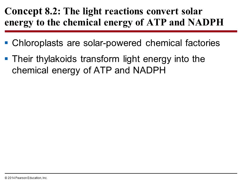 Concept 8.2: The light reactions convert solar energy to the chemical energy of ATP and NADPH