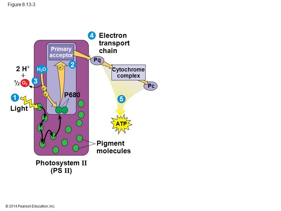 4 Electron transport chain 2 2 H  3  P680 1 5 Light Pigment