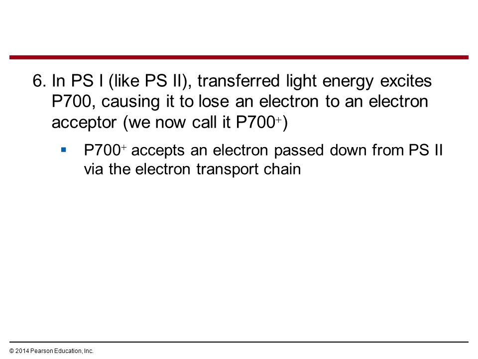 In PS I (like PS II), transferred light energy excites P700, causing it to lose an electron to an electron acceptor (we now call it P700)