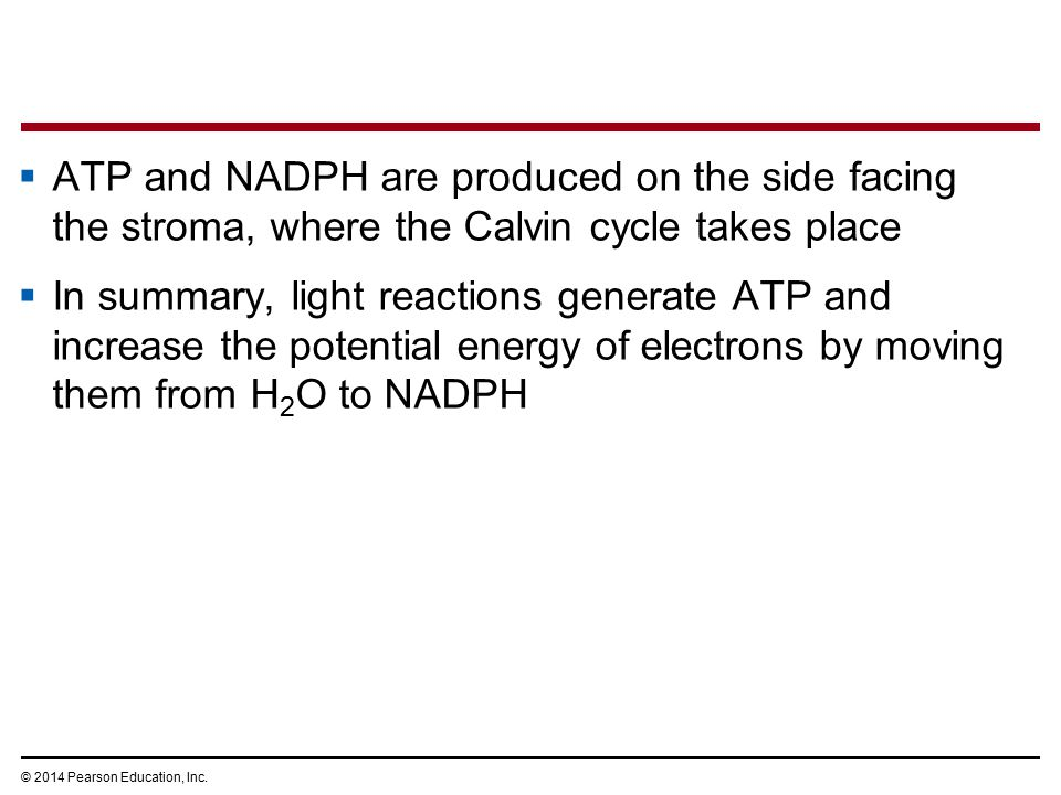 ATP and NADPH are produced on the side facing the stroma, where the Calvin cycle takes place
