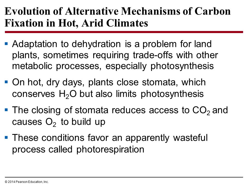 Evolution of Alternative Mechanisms of Carbon Fixation in Hot, Arid Climates