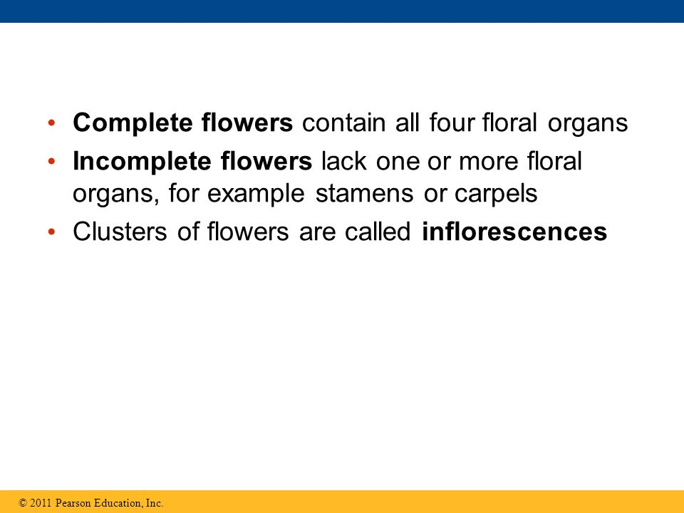 Complete flowers contain all four floral organs