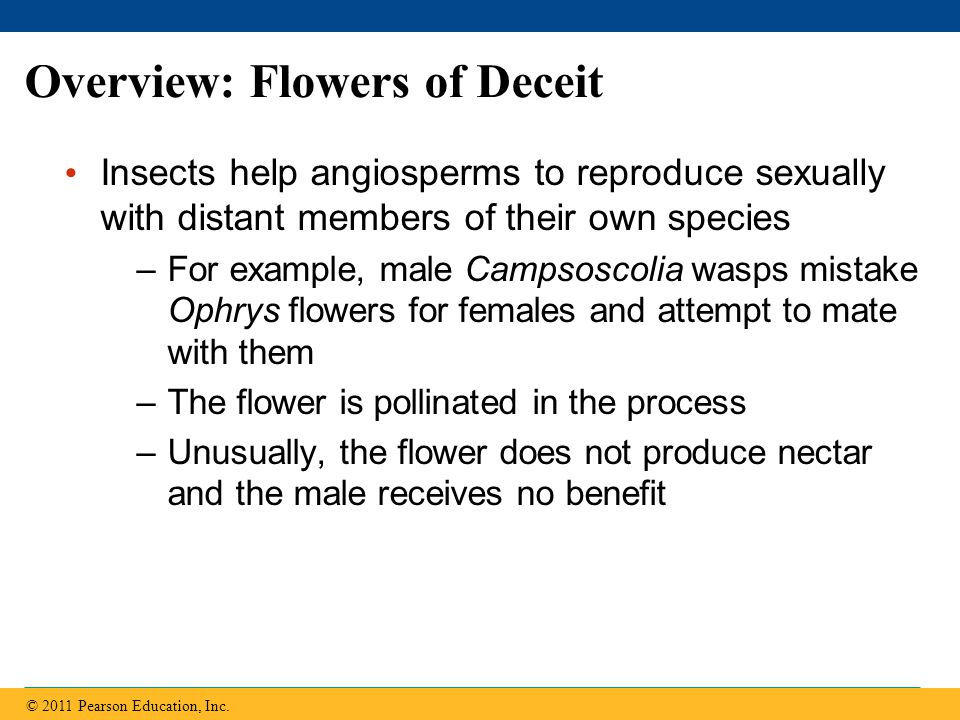 Overview: Flowers of Deceit