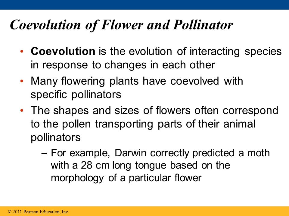 Coevolution of Flower and Pollinator