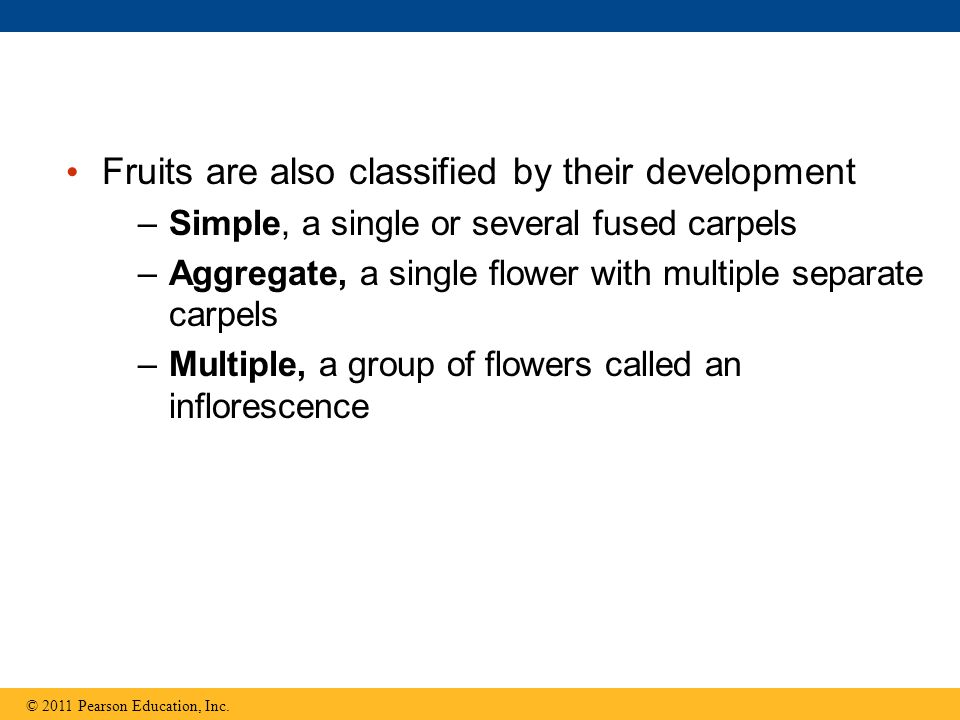 Fruits are also classified by their development