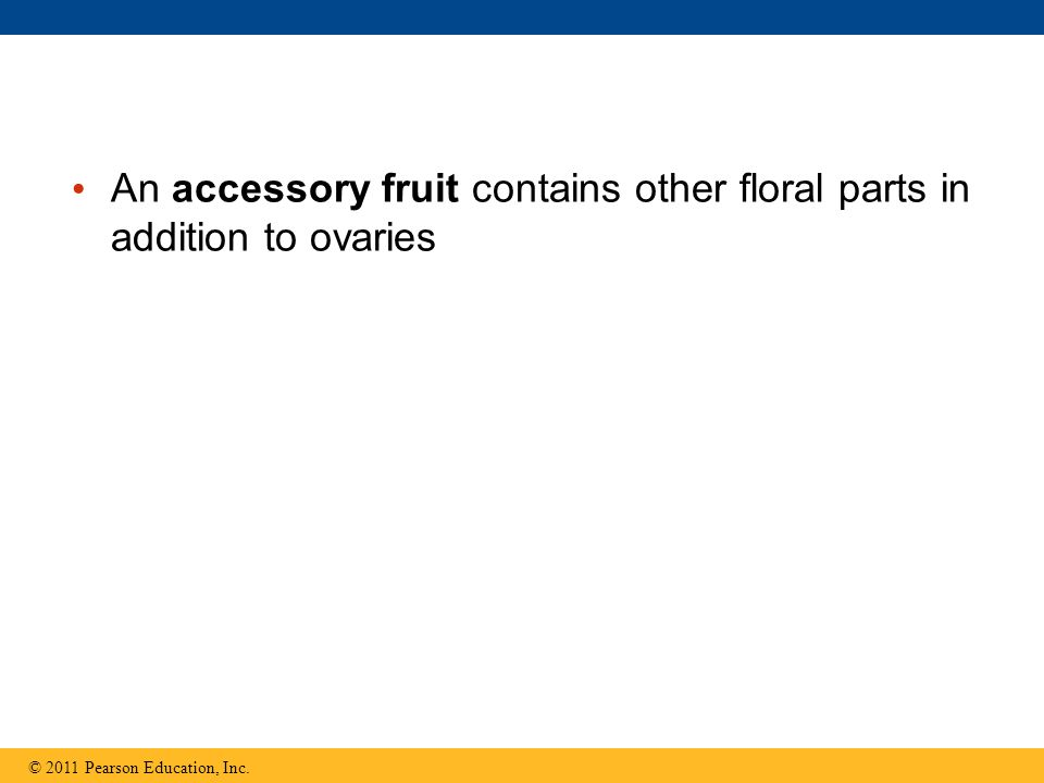 An accessory fruit contains other floral parts in addition to ovaries