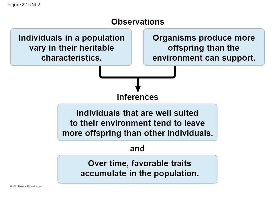 Individuals in a population vary in their heritable characteristics.