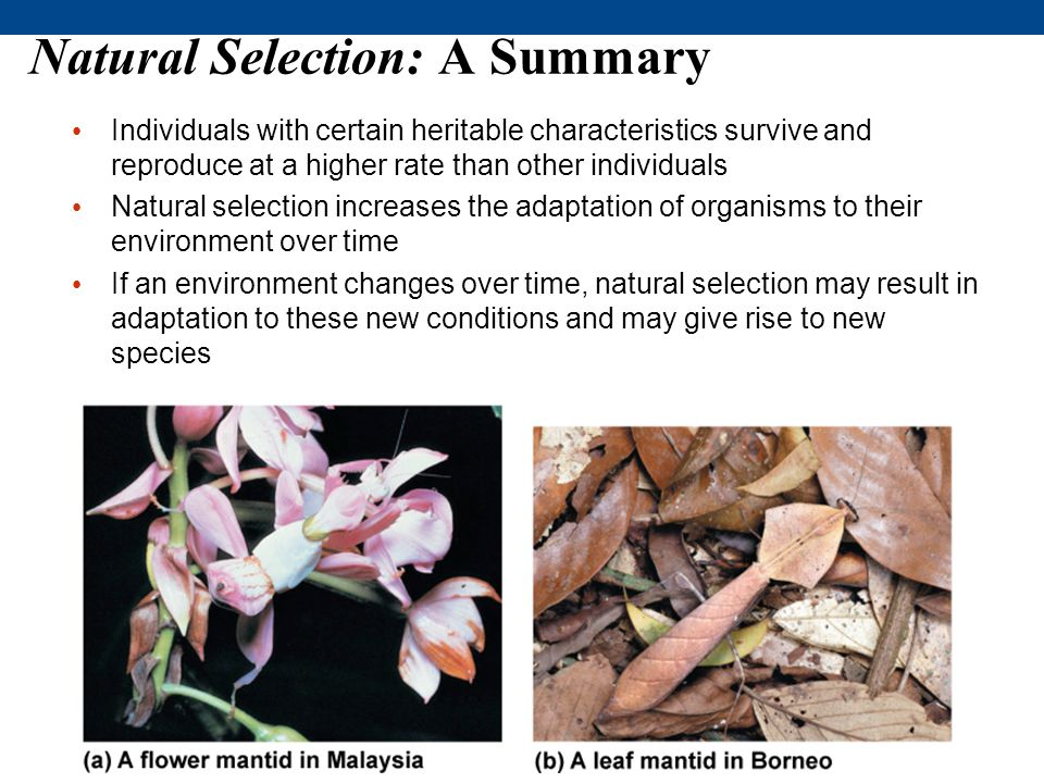 Natural Selection: A Summary
