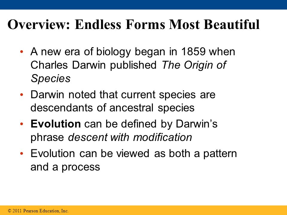 Overview: Endless Forms Most Beautiful