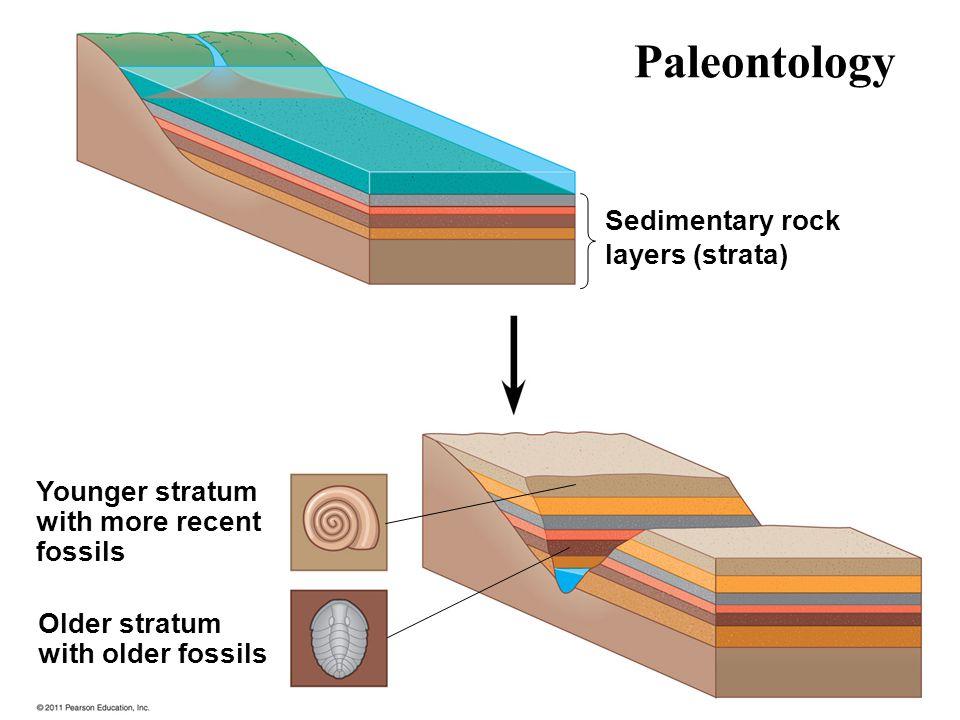 Paleontology Sedimentary rock layers (strata) Younger stratum