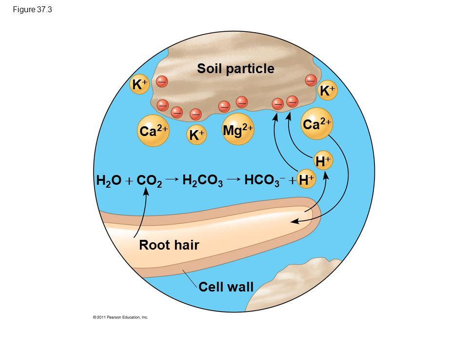Soil particle   K K        Ca2 Ca2 Mg2 K H H2O  CO2