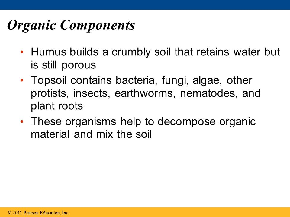 Organic Components Humus builds a crumbly soil that retains water but is still porous.