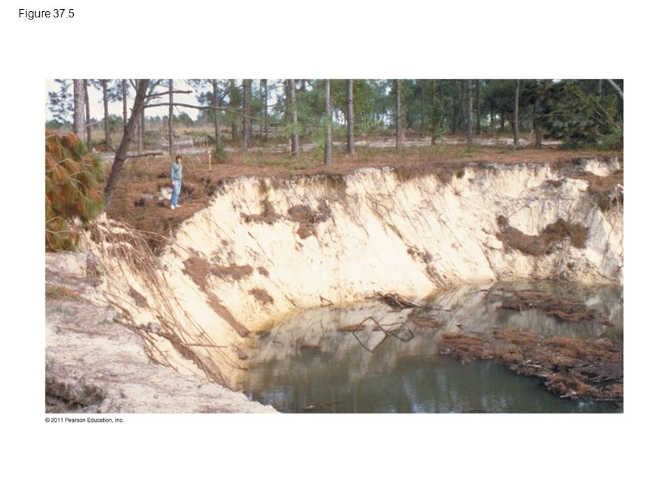 Figure 37.5 Figure 37.5 Sudden land subsidence.